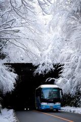 雪の天城路③