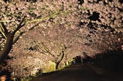 桜模様 Ⅵ ~桜降る夜~