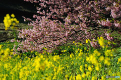桜模様 Ⅲ
