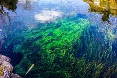 草原を泳ぐ