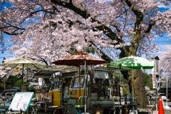 春cafe