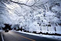 雪の天城路②