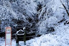 雪の天城路