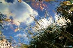 水たまりも秋