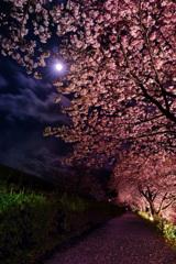 みなみの夜桜