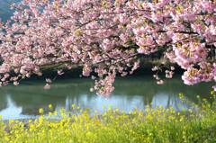 桜模様 Ⅳ