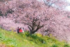 みなみの桜と人力車