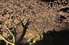 桜模様 Ⅶ ~桜降る夜~
