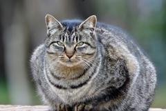 公園の猫②