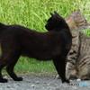 近所の野良猫54 異なる視線の先は何