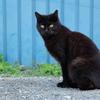 近所の野良猫33