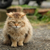 近所の野良猫22