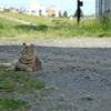 近所の野良猫47