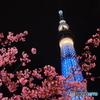 東京スカイツリー114 河津桜(横撮り)