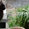 近所の野良猫31 草を見つめる