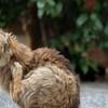 近所の野良猫29 ブラッシング