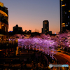 東京ミッドタウンの桜ライトアップ2