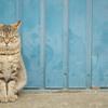 近所の野良猫24 青い倉庫前の猫