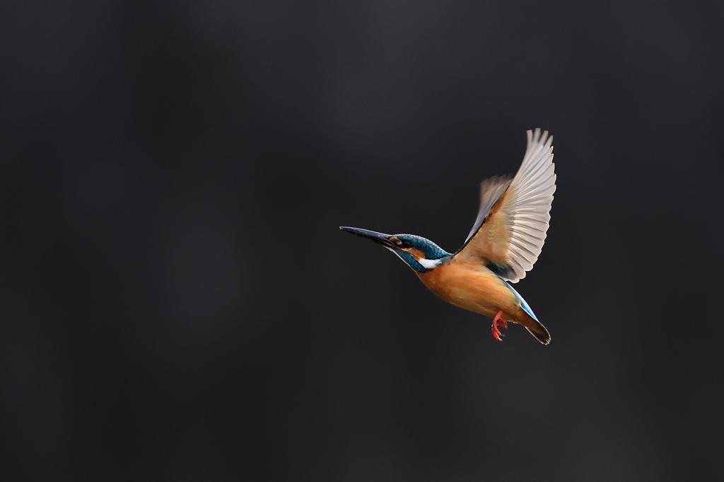 透ける翼 2