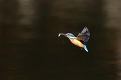 お魚ゲット 2021_95