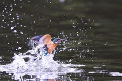 お魚ゲット 2021_84
