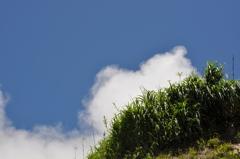 神津島 前浜海岸より丘を望む
