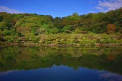 薬師池の色