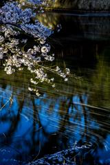 桜流し Ⅱ