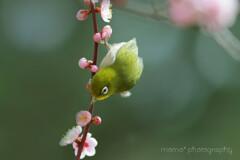春のめぐみ♪。.:*・゜