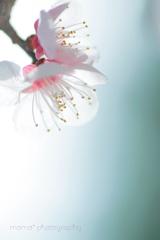 春の輝きに満ちて☆.。.:*・