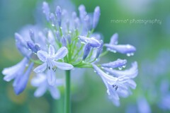 Purple Rain☆.。.:*・