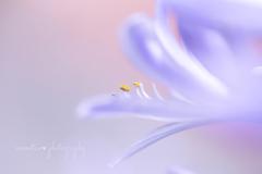 愛の花。.。:+♡*♥