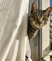 愛猫  モスくん