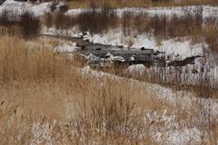 西野川の冬景色