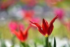 彩華に咲く