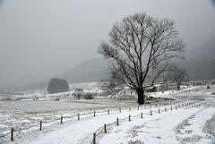 里山の守り木