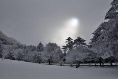 雪寂の木漏れ日