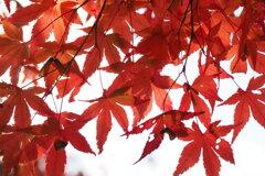秋のちぎり絵