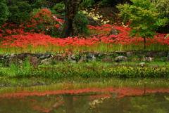 映り込む秋