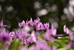 春夢のころ