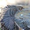 コホウアカ。たまには羽根を伸ばしたい。