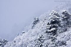 雪化粧 Ⅲ