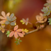 金露梅の紅葉
