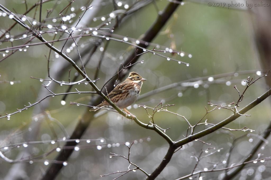 雨 時々 雪
