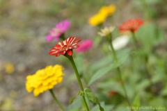小さなお花畑