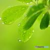 雨の恩恵 Ⅰ