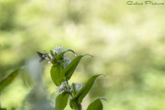 白花杜鵑草とオオスカシバ Ⅰ