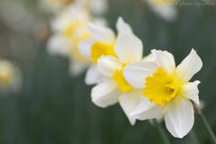 春の三重奏