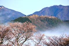 竹田城跡 桜