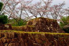 竹田城跡と桜 ミニチュア版
